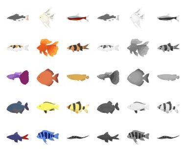 Different types of fish cartoon,mono icons in set collection for design. Marine and aquarium fish vector symbol stock web illustration.