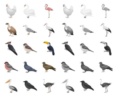 Types of birds cartoon,mono icons in set collection for design. Home and wild bird vector symbol stock web illustration.