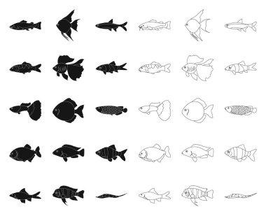 Different types of fish black,outline icons in set collection for design. Marine and aquarium fish vector symbol stock web illustration.