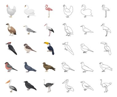 Types of birds cartoon,outline icons in set collection for design. Home and wild bird vector symbol stock web illustration.