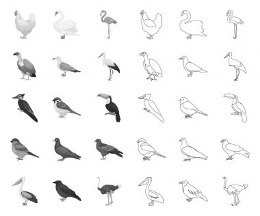 Types of birds mono,outline icons in set collection for design. Home and wild bird vector symbol stock web illustration.