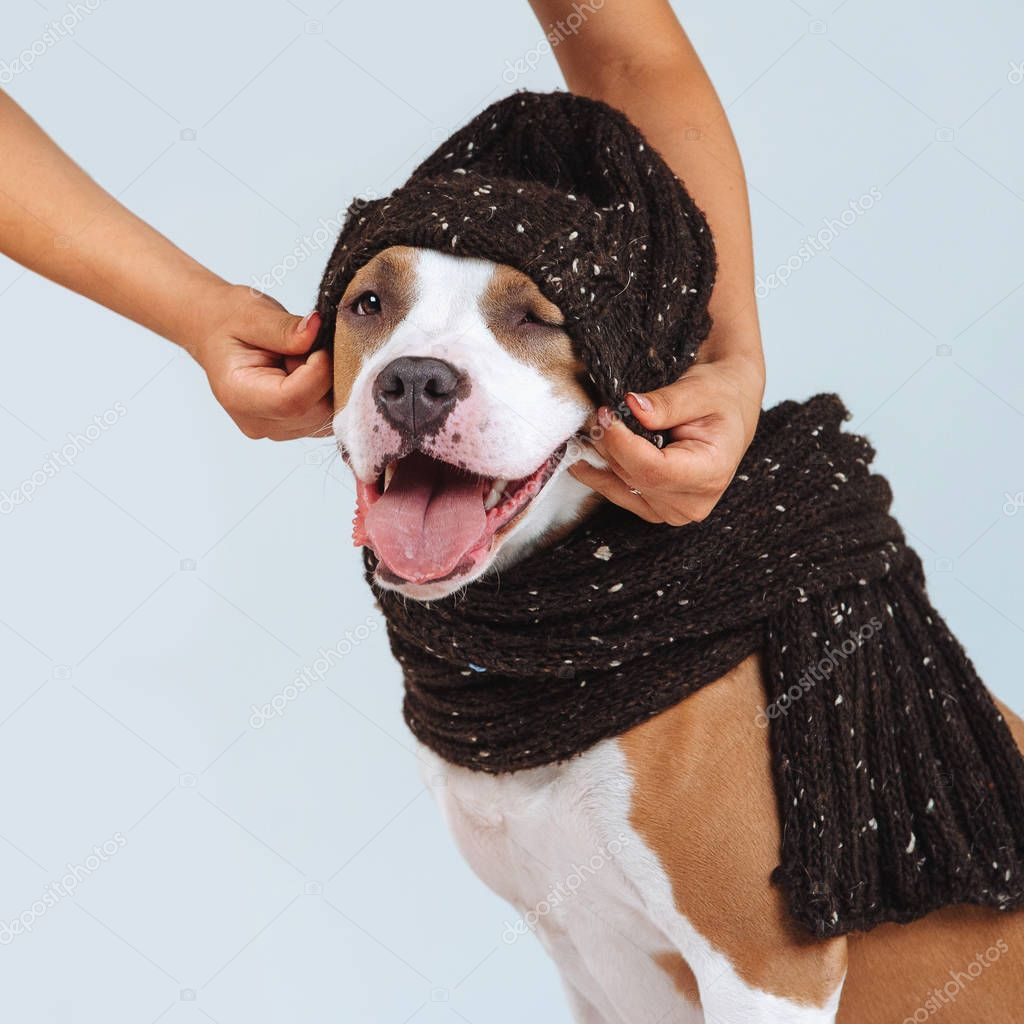A man puts a hat on a dog. Clothes for dogs. Man caring for a pet