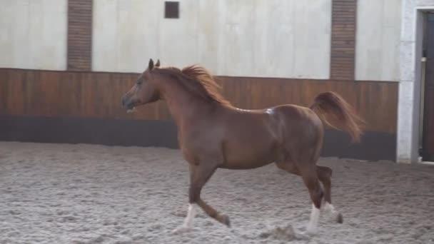 Krásní, dobře rozběhení koně ve stáji a na pastvě 6