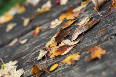 """Картина, постер, плакат, фотообои """"крупный план осенних листьев на деревянной скамейке в городском парке постеры плакаты"""", артикул 314695210"""