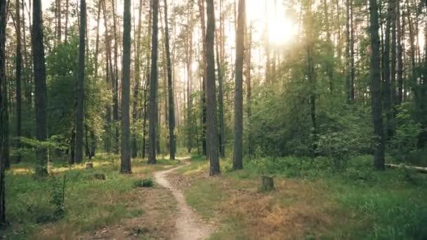 Gyönyörű természet erdei fák zöld fű nap Woods naplemente