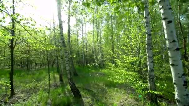 Procházka po stezce v jarním lese