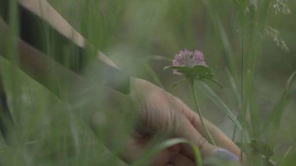 Mädchenhand in der Natur