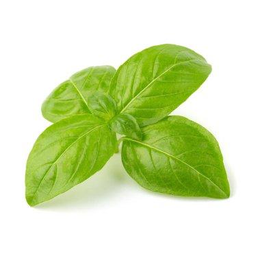 fresh green basil leaves isolated on white background