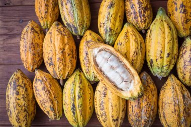 Cacao fruit, raw cacao beans, Cocoa pod background.