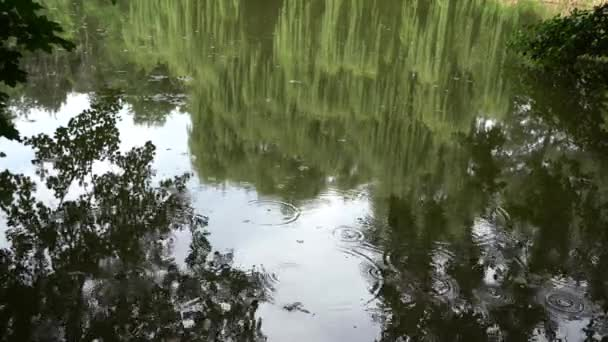 Déšť na lesním jezeře. Kruhy na vodě. Odrazy obrovských stromů ve vodě řeky, jezera.