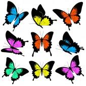 Fotografia cartolina postale con collezione di variopinte farfalle di volo isolato su priorità bassa bianca
