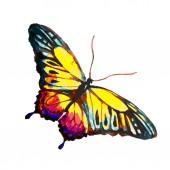 světlé akvarel motýl izolovaných na bílém pozadí