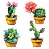Fotografie kaktus, nastavte sukulentních rostlin, izolované na bílém