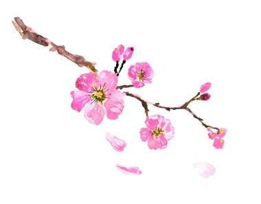 Sakura tree watercolor illustration, cherry bloom stock vector