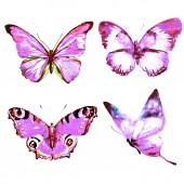 Fotografie motýli, izolované na bílém pozadí, akvarel