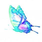 pillangó elszigetelt fehér background, akvarell