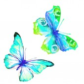 beautiful   butterflies, watercolor, isolated on a white