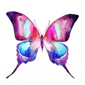 beautiful bright  butterfly, watercolor, isolated on a white