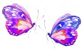 Fotografie beautiful bright  butterflies, watercolor, isolated on a white