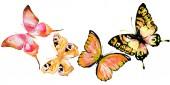 belle farfalle arancione, isolate su un bianco