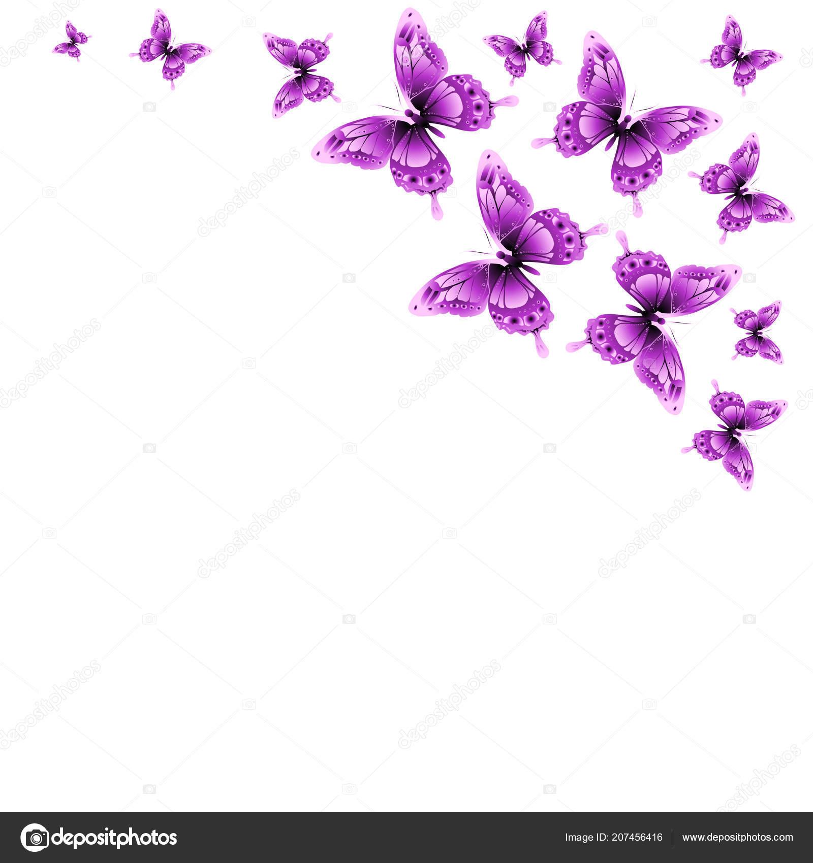 Disegno Delle Farfalle Rosa Isolato Sfondo Bianco Foto Stock