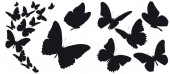 černá silueta motýlů izolovaných na bílém pozadí