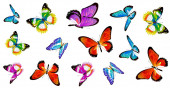 Bright colorful butterflies isolated on white background