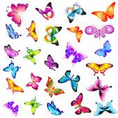 Světlé barevné motýly izolované na bílém pozadí