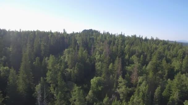 Les v horské krajině Letní cestování Divoká příroda Scénická letní bříza