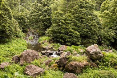 Forest with the river, Sao Miguel, Azores