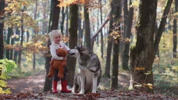 Girl and dog. Beautiful woman playing with her dog. Child and dog. Girl playing with dog in the forest. Little girl with husky in the forest. Girl playing with her husky in the park