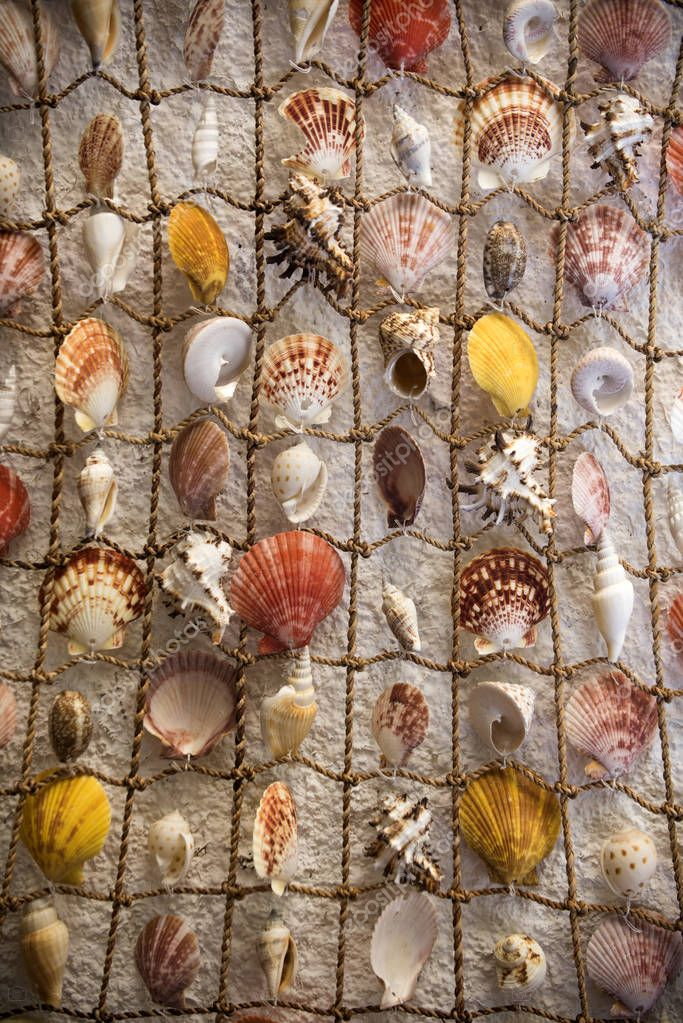 Sea decor and design concept. Network with beautiful seashells as decor. Fishing net with seashells. Decoration for interior or walls
