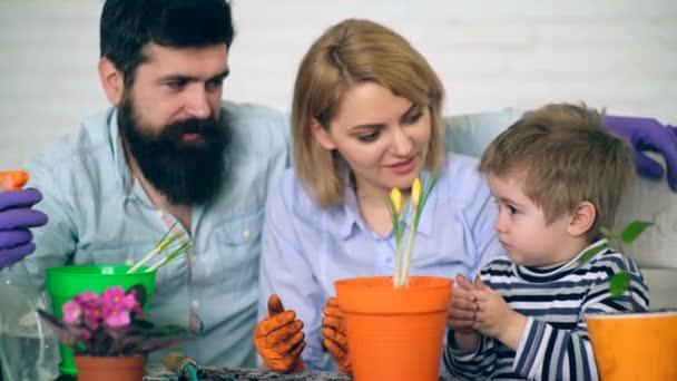 Matka a otec učí svého syna jak zasadit květiny v květináčích. Koncepce výsadby květin.