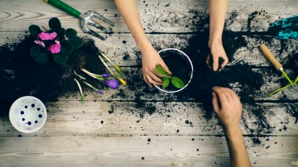 Hands of two adults close up, planting flowers in a pot. Concept of gardening.