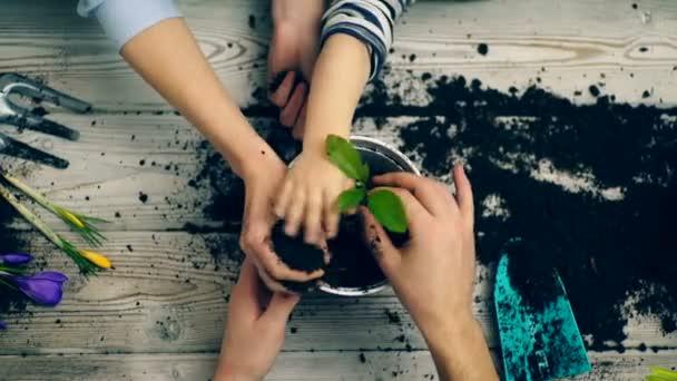 Ruce z rodinných příslušníků, kteří vysázeny květiny v květináči. Rukou detail hoblovaný květiny v květináči. Koncept zahradnictví