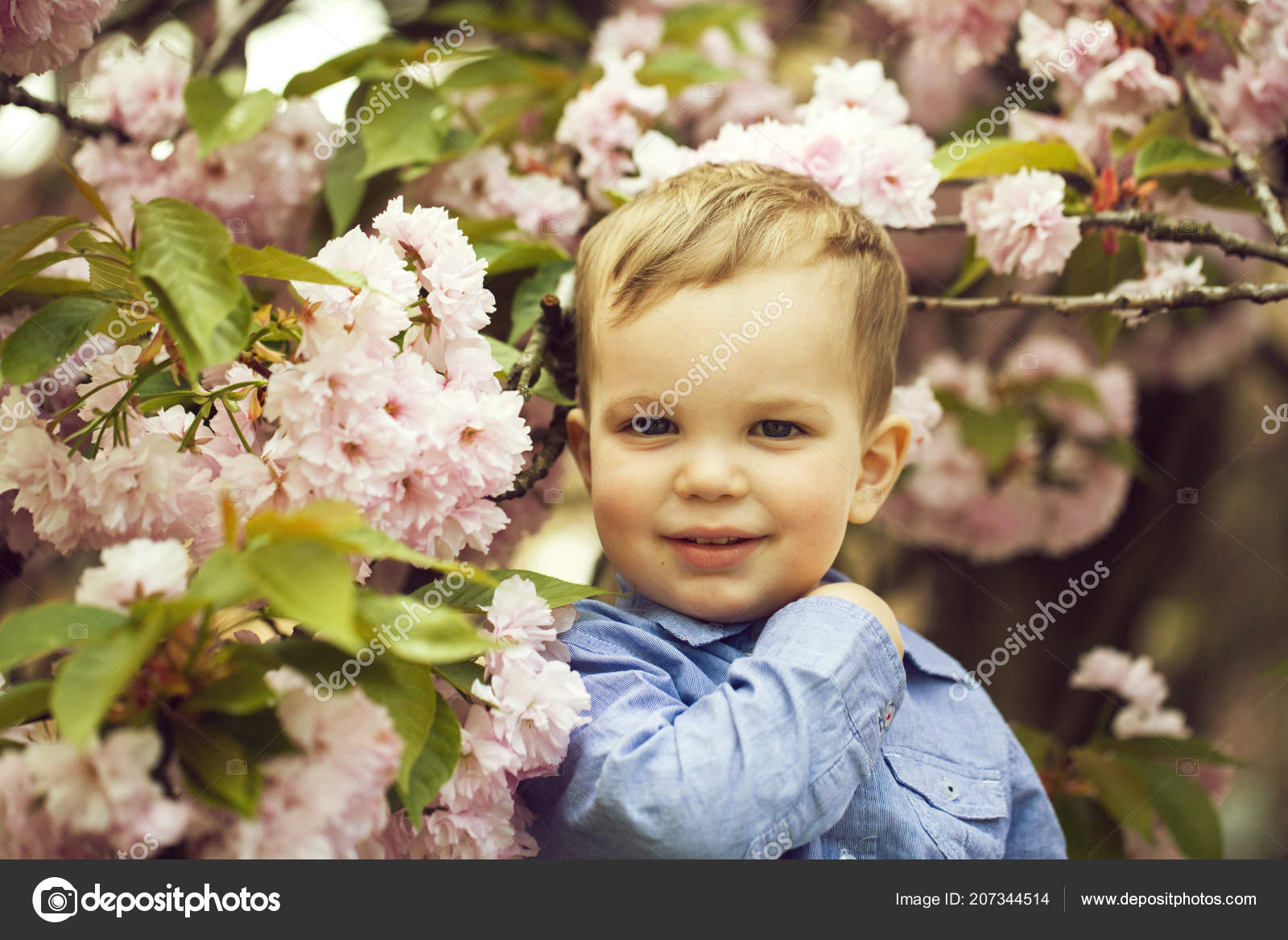 Cute Baby Boy Among Pink Blossoming Flowers Stock Photo
