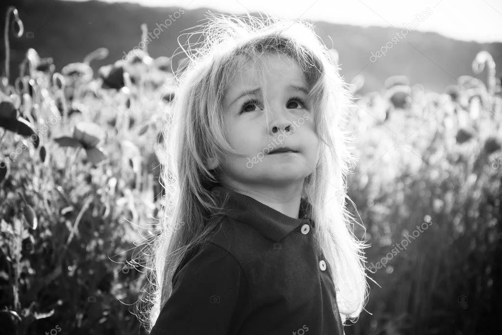 child or little boy in field of poppy seed