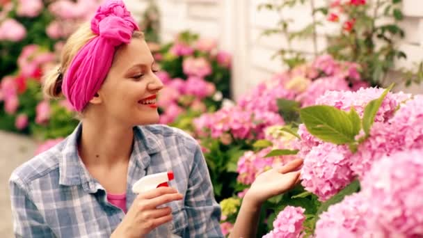 A woman waterd pink hydrangea in the summer. Incredibly beautiful pink flowers that a woman watered in the summer. The concept of gardening.