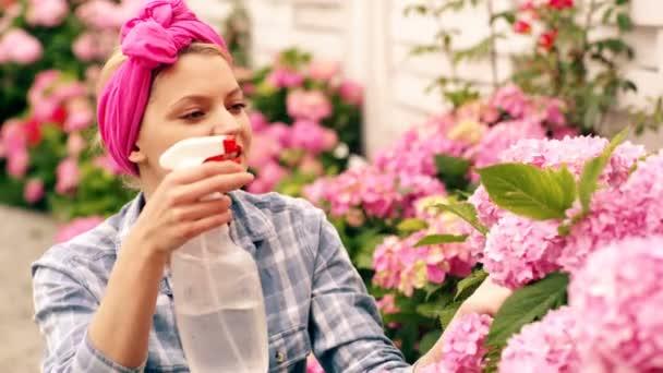 Usmívající se žena s růžovým kapesníkem zalévala růžové květy. Žena se v létě stará o hortenzii. Koncepce zahradničení.