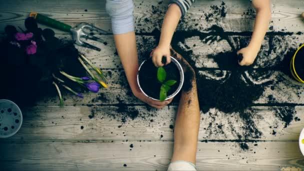 Rukou rodiče a syna zavřít kdo zasadit květiny v květináčích. Detailní záběr rukou