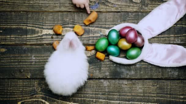 Frohe Ostern. Nahaufnahme eines Hasen auf einem Tisch, der Möhren in der Nähe von Ostereiern isst. Nahaufnahme einer Jungenhand, die den Osterhasen füttert. Osterhasen und Eier auf dem Tisch.