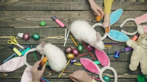Colorful easter eggs on wooden desk with live hares. Happy family are preparing for Easter. Close-up of family-friendly hands that feed hare on a wooden table with Easter eggs.