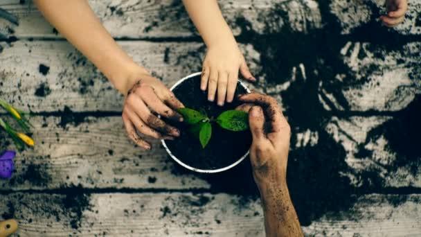 Kertész keze közelről. Ültetési nyári virágok cserépben. Emberek, Kertészet, virág, ültetés és hivatás fogalma. Közelkép a nő vagy a Kertész keze ültetés virágok pot otthon.