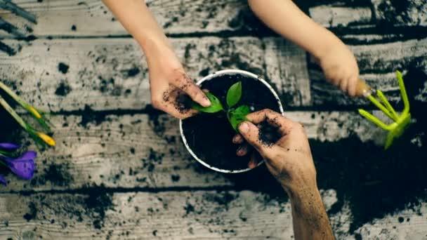 Koncept zahradnictví. Pohled shora rukou rodiny, které pěstování květiny v květináčích. Šťastný jarní čas