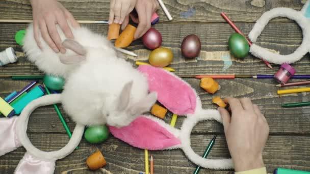 Živé zajíce na dřevěné pozadí. Veselé velikonoce. Velikonoční vajíčka na dřevěné pozadí. Šťastná rodina, příprava na Velikonoce. Vejce a bunny na stůl