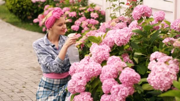 Woman cares, spray pink flowers in the flower bed. Woman cares for pink flowers in country house. Concept of care for flowers. Unbelievably beautiful lush buds of pink flowers.