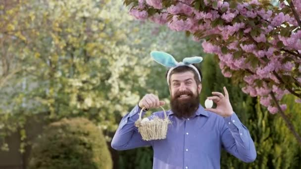 Vadászat tojás és vicces húsvéti nap. Szakállas férfi visel nyuszi füle, és miután húsvéti tojást. Meglepett nyuszi férfi viselő nyuszi fülek.