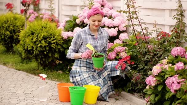 Care for a potted plant. Planting home plants outdoors. Hands of a young woman planting seedlings in the flower pot. Woman are potting some plants in pots at home. Summer flowers. Care flowers.