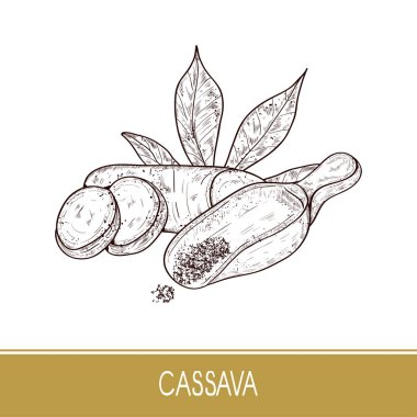 Cassava. Tuber,  leaves, powder, scoop. Sketch. On a white background.