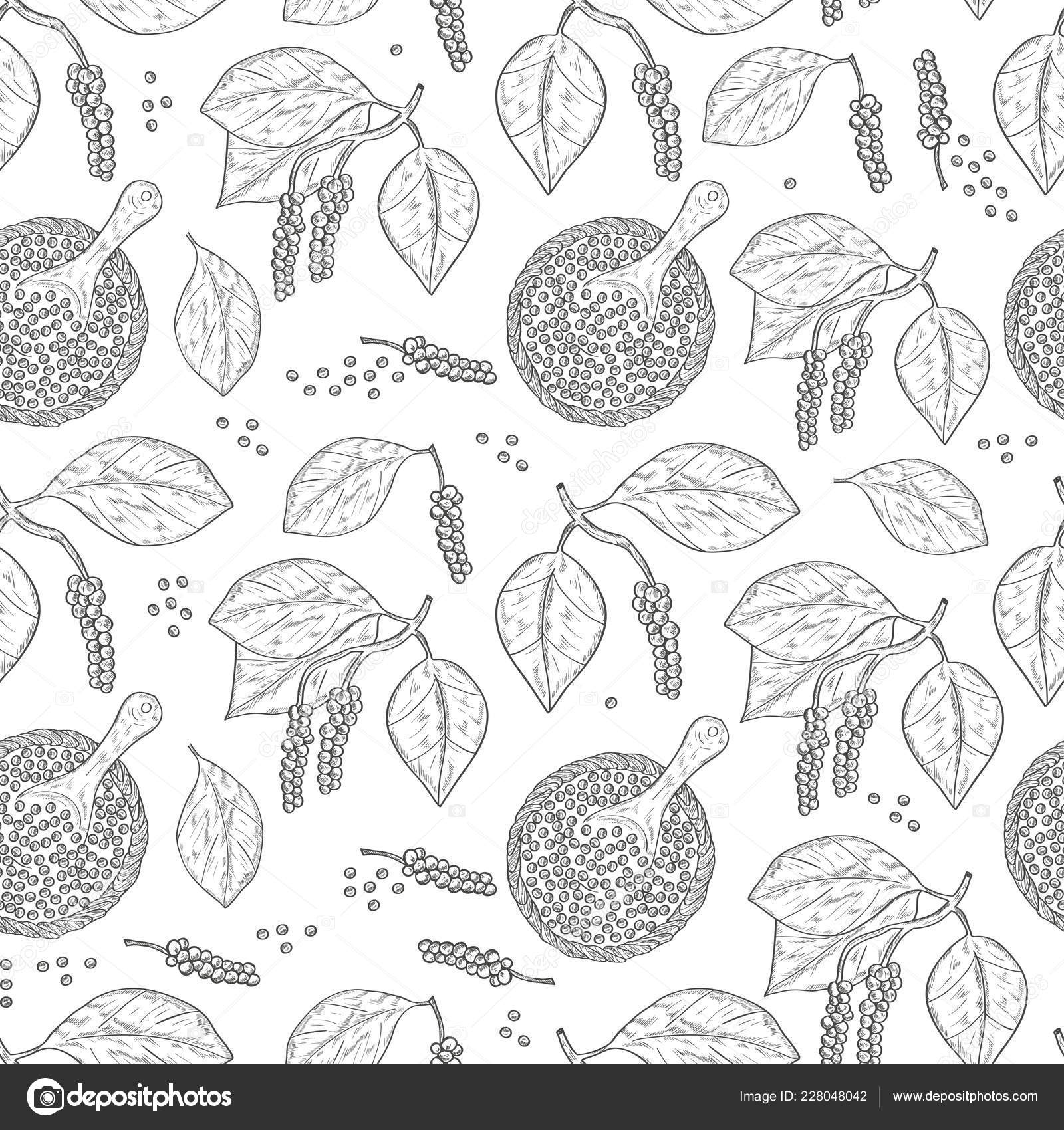 Pepper Plant Leaves Fruit Texture Wallpaper Seamless Sketch Monochrome On A White Background Vector Image By C Kosolga Vector Stock 228048042